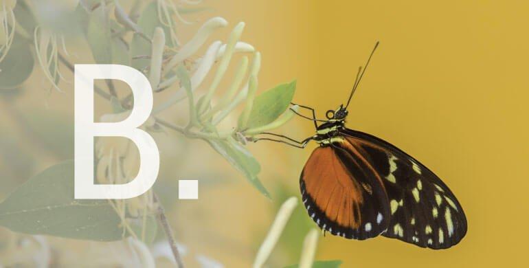 B-Biodiversidade